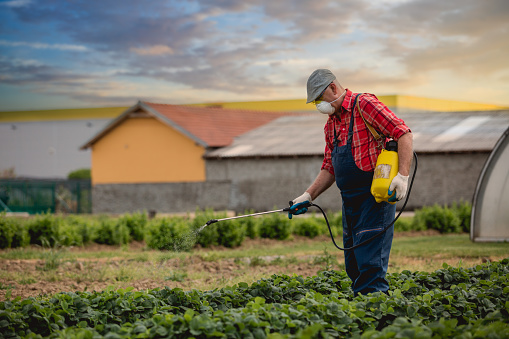A male farmer spays herbicide in a field